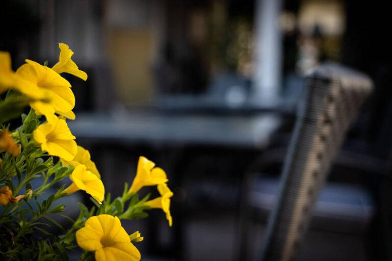 Blumen in der Taverna Kolossos